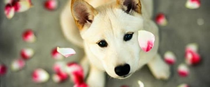 Image result for cute puppy photo