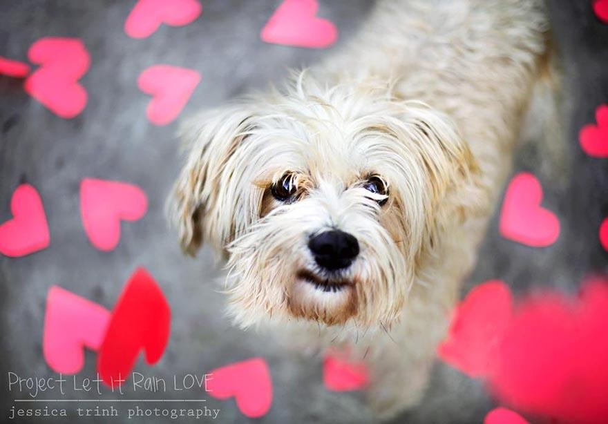 shelter-dog-photos-let-it-rain-love-jessica-trinh-2