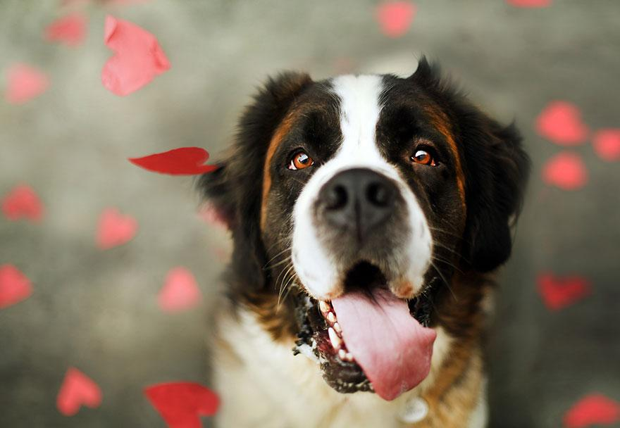 shelter-dog-photos-let-it-rain-love-jessica-trinh-6