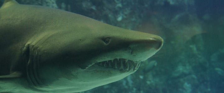 11 Ways to Practice Guitar While You Watch Shark Week