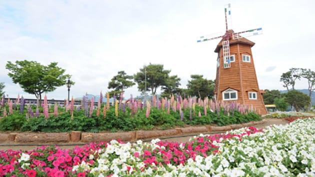 Visit Korea-  Azalea Festival