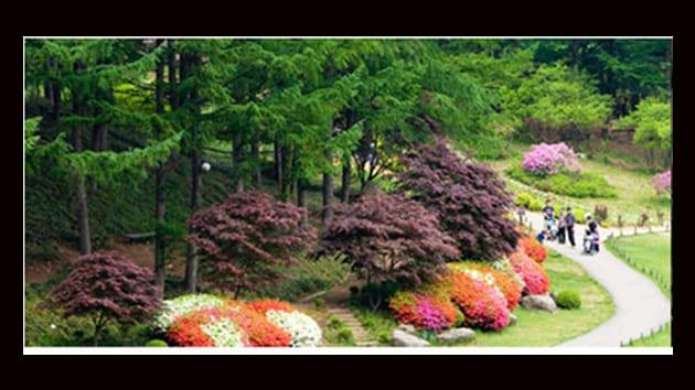 Visit Korea - morning calm