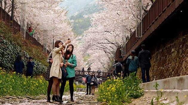 Visit Korea - yeaojwa stream
