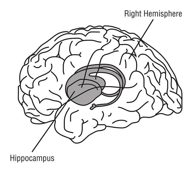 hippocampus-148151_640