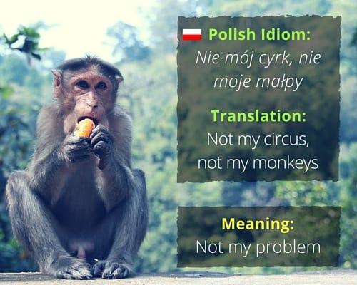 fascinating idioms in different languages idiom nie matildesup3j cyrk nie moje maaring130py